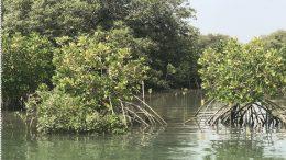 mangrove karachi 2020