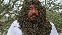 honey bee stung pakistan