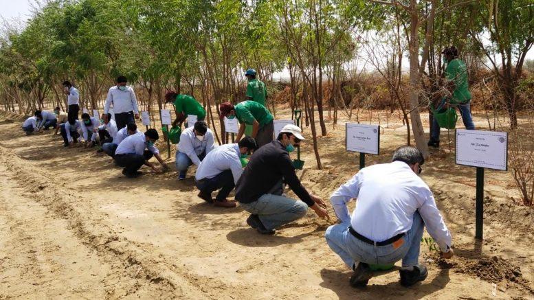 Thar Million Tree Plantation (TMTP) Program