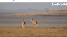 chinkara hunting license