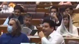 majeed niazi profile photo halqa