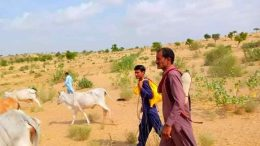 Yet Another Drought in Thar